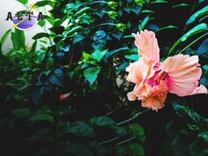 """Love is the flower you've got to let grow, like the memories you spend here in Alta Cebu"""" ❤️🌸😍📸 Fresh Green, Cebu, Landscapes, Peace, Memories, Garden, Nature, Flowers, Plants"""