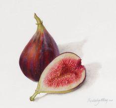 figs botanical - Google Search