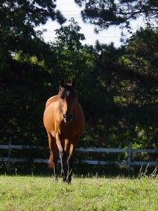 How Much Do I Feed My Senior Horse?   The Feed Room