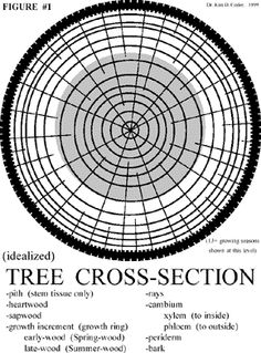 like this diagram about tree growth measurements