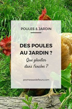 Hens in the garden, what to plant in the enclosure? Potager Garden, Garden Planters, Chicken Runs, Green Nature, Raising Chickens, Plantation, Hens, Horticulture, Botany