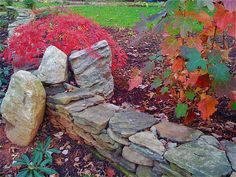 Traditional Outdoors from Virginia Rockwell. My fave Japanese Red Maple. Japanese Red Maple, Stone Retaining Wall, Look Man, Shade Trees, Traditional Landscape, Autumn Garden, Cool Landscapes, Toscana, Native Plants