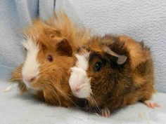 Moxie and Avril (A647599)