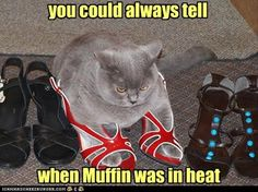 Oh my. #cat #humor #cats #funny #quotes #meme #lolcats #cute =^..^= www.zazzle.com/kittyprettygifts