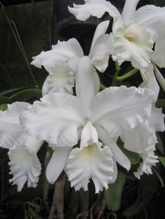La soberana de todas las flores, Â¡preciosa!                              …