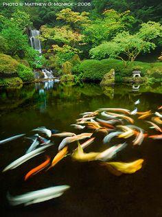 Portland Japanese Garden Koi Pond