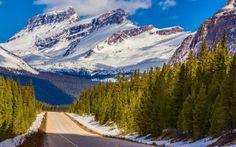 Aspen Trees in Banff National Park Alberta Canada Ken Kaminesky Landscape Wallpaper, Nature Wallpaper, Nature Images, Nature Pictures, Mountain Wallpaper, Forest Road, Snow Mountain, Banff National Park, Natural Phenomena