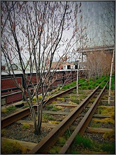 The Highline.  NYC.  It's an old railroad track rebuilt into a park in the meat-packing district.