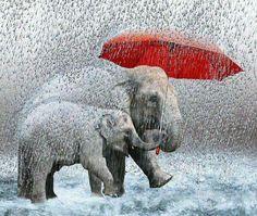 Elephant art - elephants sharing a red umbrella All About Elephants, Elephants Never Forget, Baby Elephants, Umbrella Art, Under My Umbrella, Walking In The Rain, Singing In The Rain, Elephant Love, Elephant Art