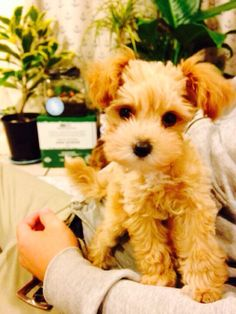 my dog Toko #dog #newzealand