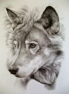 Awesome Pencil Drawing Photos. - Bilder Land