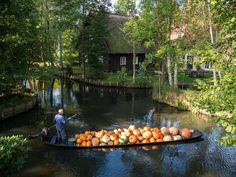 Farmer Harald Wenske transports pumpkins on a punt over a river near Lehde, eastern Germany PATRICK PLEUL/AFP/Getty Images