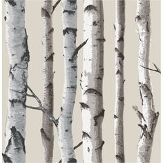 Fine Decor Birch Tree Wallpaper Natural Beige / Cream - Fine Decor from I love wallpaper UK