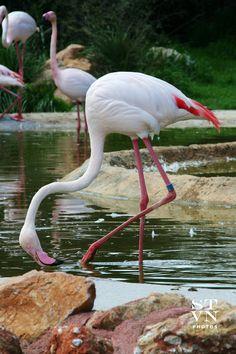 """""""Attica Zoological Park"""" Spata  #ATTIKI #GREECE"""