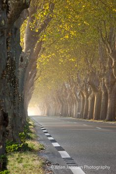 Tree lined road near Saint Remy de-Provence, France. © Brian Jannsen Photography