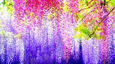 flowers-beautifull-nice-6.jpg (1920×1080)