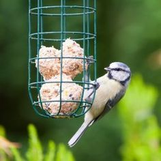 This is a guide about making homemade suet. You can attract many birds by putting out suet cakes. You can easily make suet cakes at home and vary them to your local bird species. Great activity when learning about birds. Outdoor Projects, Garden Projects, Garden Ideas, Birds And The Bees, Suet Cakes, How To Attract Birds, Bird Food, Backyard Birds, Bird Species