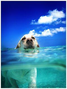 Keep swimming, swimming