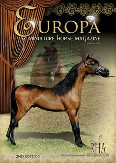 Europe's First Miniature Horse Magazine Announcing a quick peek at the 2nd Edition front cover of Europa Magazine due for release in January 2016. Advertising space left! Contact us today. Europe's First Miniature Horse Magazine Announcing a quick peek at the 2nd Edition front cover of Europa Magazine due for release in January 2016. sales promotion by Lil Beginnings Miniature Horses