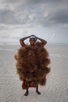 harvesting seaweed in Zanzibar by Nicola Millesuoni, 2009. -  Eucheuma or Kappaphycus guesses  Jane Pottas,