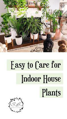 Best Indoor Plants, Cool Plants, Indoor Garden, Potted Plants, Garden Plants, Indoor Hanging Plants, Indoor Plant Decor, Living Room Plants, House Plants Decor