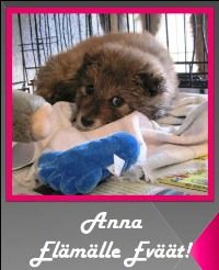Pro Animals Finland ry