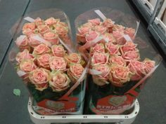 #Rose #PinkFiness; Available at www.barendsen.nl
