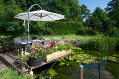 .The deck & pond.             t