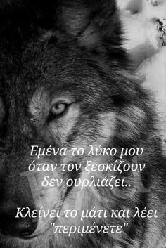 Wolf Quotes, Movies, Movie Posters, Art, 2016 Movies, Craft Art, Film Poster, Films, Kunst