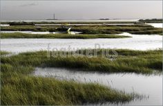 Essex marshes