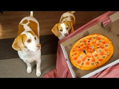 Dogs vs. Talking Pizza Prank: Funny Dogs Maymo & Penny - YouTube