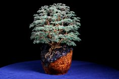 He makes lifelike trees using fractal geometry, reflecting all that is living…