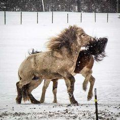 Kommunikation imellem og med heste