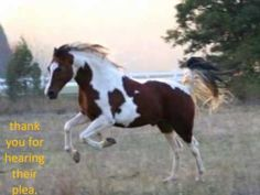horse abuse the sad story((don't watch if you can't see truth))