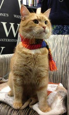 Beautiful Streetcat Bob...read the book it is truly wonderful :))