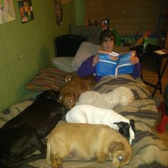 Melissa has a whole heap of dogs to help her study! | Where We Study Photo Contest #wherewestudy #studyspaces #onlinelearning