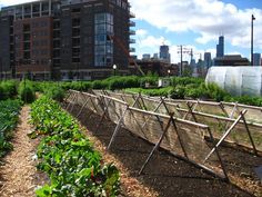 1046 City Farm Chicago