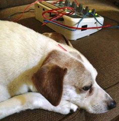 Veterinary Acupuncture: One Dog Mom's Experience | My Pet Rover