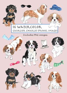 CLIP ART- Watercolor Cavalier King Charles Spaniel Set. 16 Images. Digital Download.