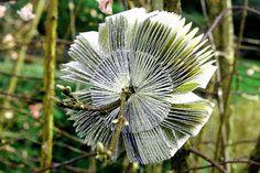 Books Don't Grow on Trees 080 by Yvette Hawkins (paperfaerie) www.yvettehawkins... www.flickr.com/... #book_arts #plants