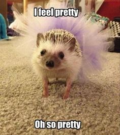 funny animal pictures (28)