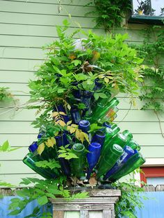 bottle tree with vine