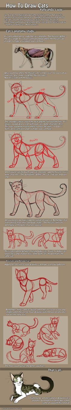 ashgrayart: http://yolly-anda.deviantart.com/art/How-to-draw-cats-anatomy-193085519