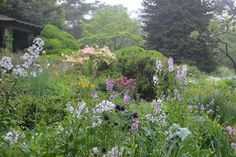 Wild Garden - The Gardens at Wave Hill || Wave Hill - New York Public Garden and Cultural Center