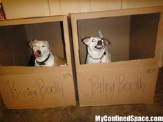 Kissing dog booths