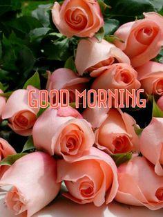 Good morning roses orange