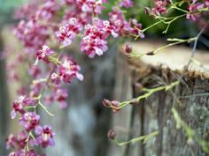 https://flic.kr/p/V5CqUU | Mini Orquídeas | Mini Orchids  ____________________________________________  Buy my photos at / Compre minhas fotos na Getty Images  To direct contact me / Para me contactar diretamente: lmsmartins@msn.com