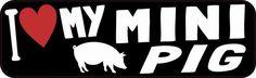 I Love My Mini Pig Bumper Sticker
