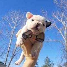 Pet Bow Tie Collar Plaid Fleece Dog Bow Tie Collar Cat Bow