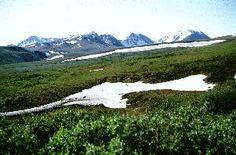 La tundra tiene una distribución circumpolar en el Hemisferio Norte pero en el Hemisferio Sur solamente se encuentra en la Península Antártica e islas